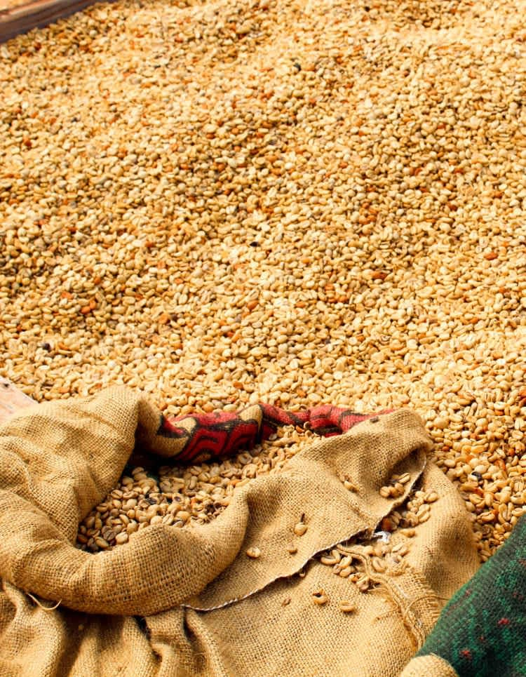 Parchment Coffee Beans